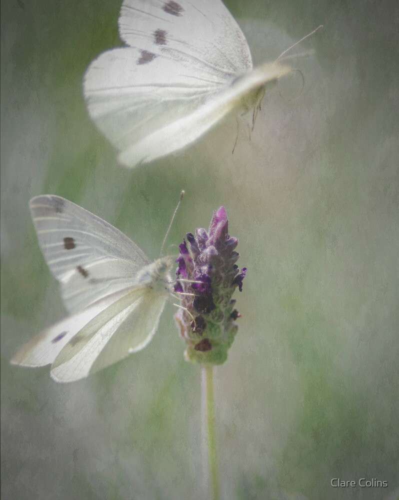 Wings on the Lavender by Clare Colins