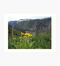 Flowers in Hells Canyon Art Print