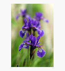 Echoes of an Iris Photographic Print