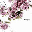 Imagine by Zen-Art (Zenith)