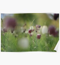 Meadow at Downton Abbey Poster