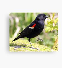 Chipper Red-Winged Bird Canvas Print