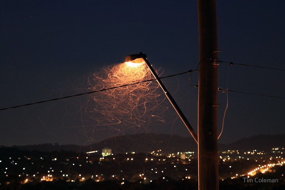 Insects under the streetlight by Tim Coleman