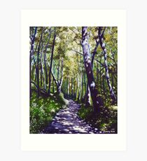 'Summer Woods (Moses Cone State Park, NC)' Art Print