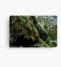 Mossy cave Canvas Print