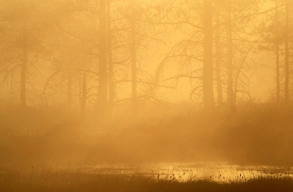 16.5.2013: Spring Morning IV by Petri Volanen