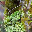 green moss by bluetaipan