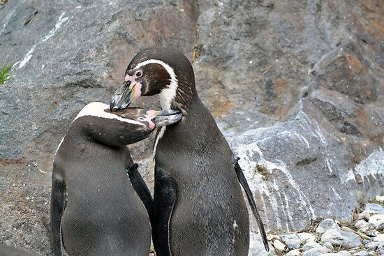 Penguin love by Madsen1981