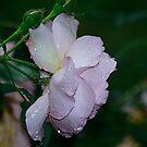 Rain In My Heart by Brenda Burnett