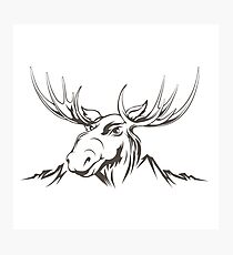 Moose head Photographic Print