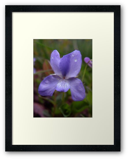 Spring Violet by vigor