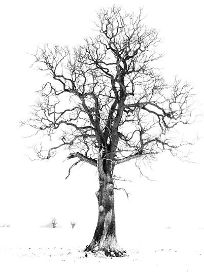 The Lonley Tree by David Moby