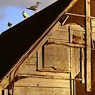 Three Gulls by Tickleart