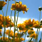 Yellow Flowers by Tickleart
