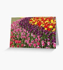 Tulip Garden in the Mid-day Sun Greeting Card