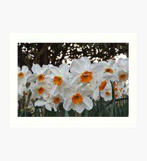 Lush & Alluring Mini Daffodils Art Print