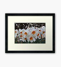 Lush & Alluring Mini Daffodils Framed Print