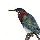 green heron by kateriewing