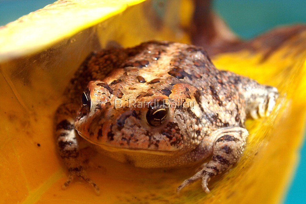 Lifeboat for a toad by ♥⊱ B. Randi Bailey
