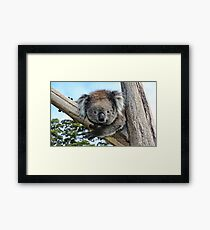 Who's looking at you? Framed Print