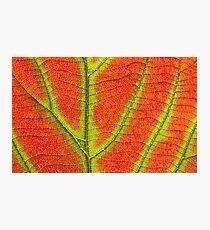 Close up Of Leaf Photographic Print
