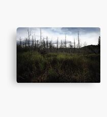 Swamp Brush Canvas Print