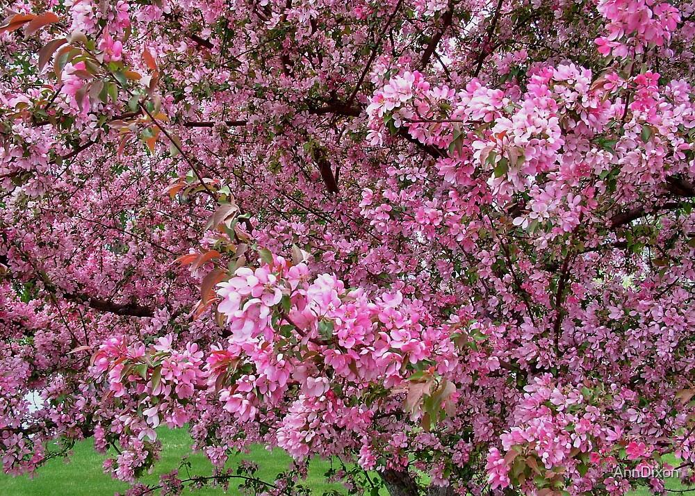 Spring Blossom by AnnDixon