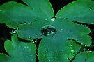 Rainy May Day by Tori Snow