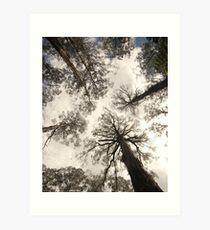 Gumtrees Art Print
