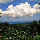 El Yunque Rainforest by Gunes Yilmaz