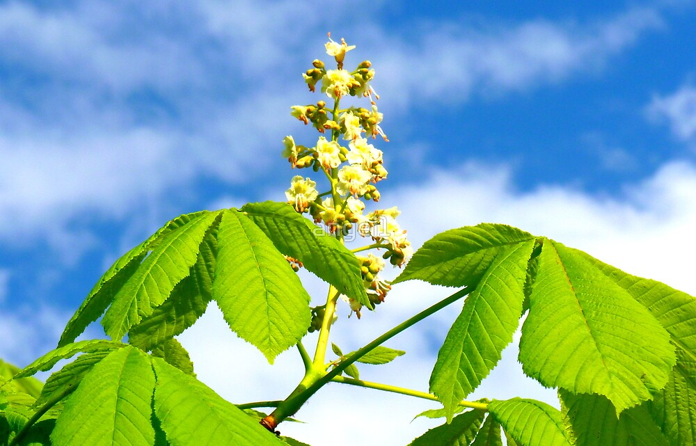 Chestnut in bloom by ©The Creative  Minds