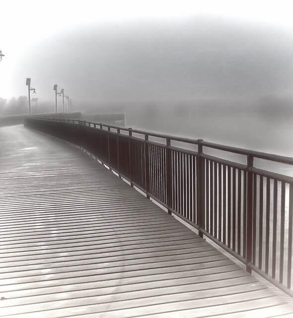 Solitude In The Morning Fog by Noble Upchurch