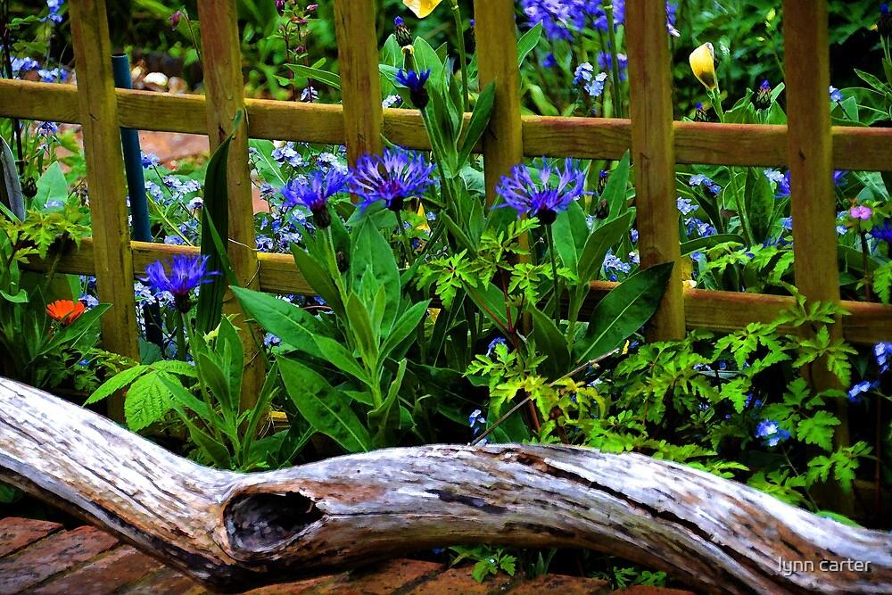 Pretty Local Garden, Lyme. Dorset UK by lynn carter