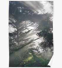 Sunlight Greeting Poster