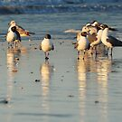 Beach Birds by JHRphotoART