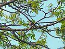 Little Bird in Black Walnut Tree by FrankieCat