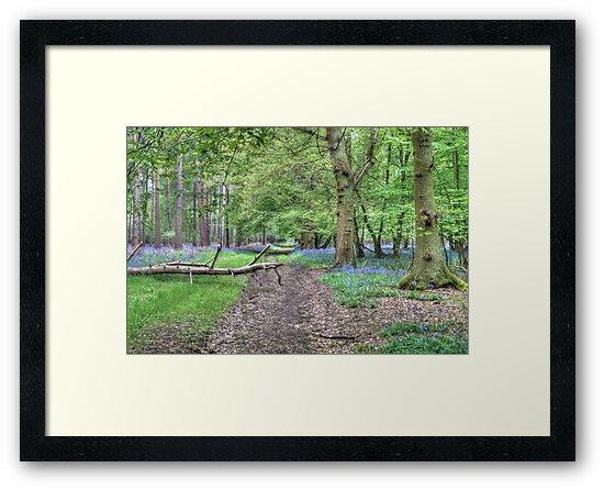 Woodland Track by Mark Thompson