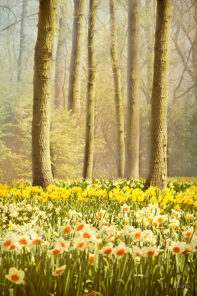 A Spring Day by Jasna