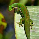 Day Gecko  - on a banana leaf by john  Lenagan