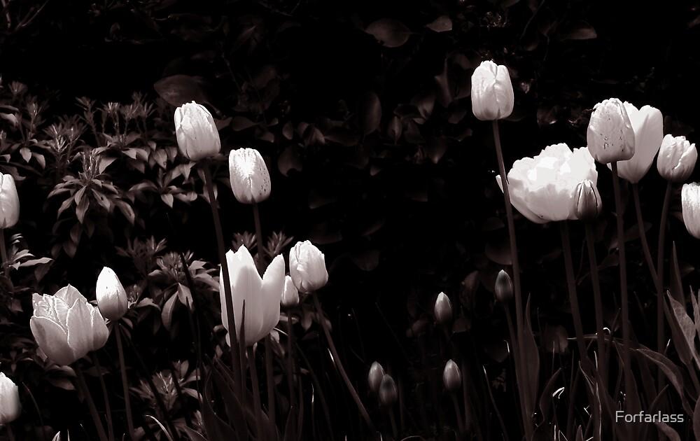Tulips in B&W by Forfarlass