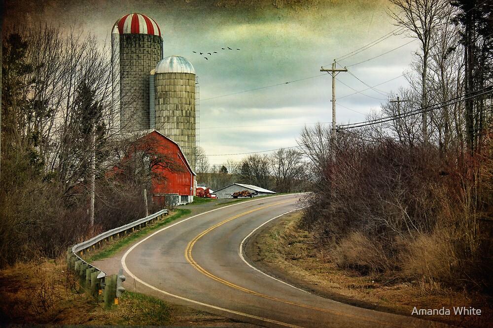 Roadside Reds by Amanda White