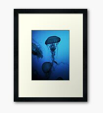 Portrait of a Jellyfish- Blue Framed Print