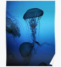 Portrait of a Jellyfish- Blue Poster