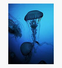 Portrait of a Jellyfish- Blue Photographic Print