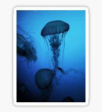 Portrait of a Jellyfish- Blue Sticker