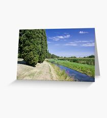 The Cypresses Greeting Card