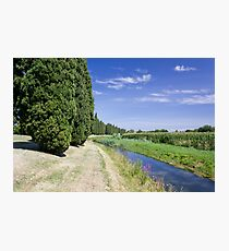 The Cypresses Photographic Print