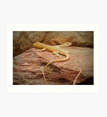 Common Side-blotched Lizard (Pair) Art Print