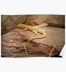 Common Side-blotched Lizard (Pair) Poster