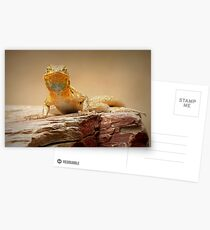 Common Side-blotched Lizard~ Eye Contact Postcards